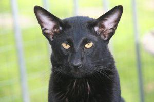 cat-408786_1280