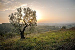 landscape-559434_1280